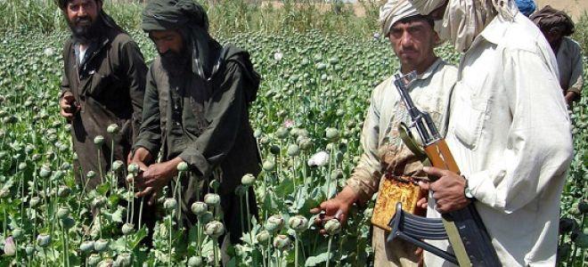 """""""Талибан"""" – крупнейший производитель опиума в Афганистане"""