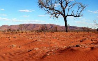 Несколько интересных фактов об особенностях пустыни