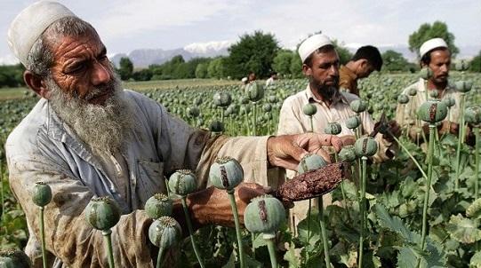 афганистан опиум