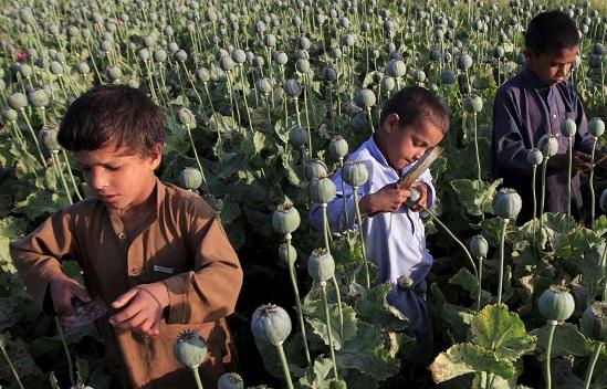 опиум в Афганистане